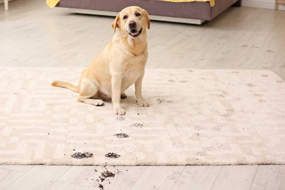 What Can Cause Area Rug Damage